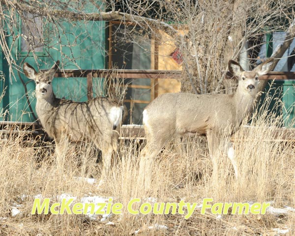 No easy answers for controlling city's deer population