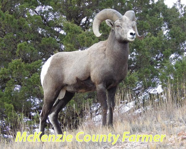 State record ram taken near Grassy Butte